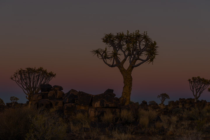 Quiver Trees in a South African Desert with a Beautiful Sun Set